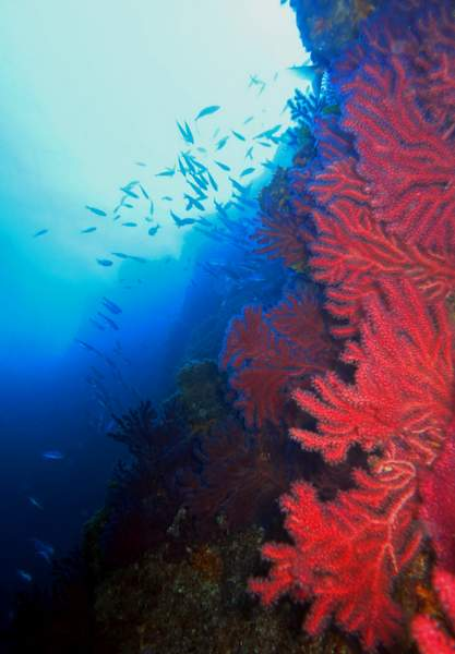 Plongée à Marseille les meilleurs sites de plongée